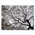 Kurt Shaffer 'Japanese Maple Spring Abstract II' Canvas Art