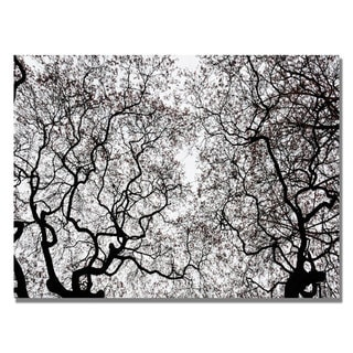 Kurt Shaffer 'Japanese Maple Spring Abstract' Canvas Art