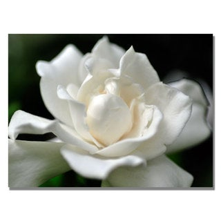 Kurt Shaffer 'Lovely Gardenia' Canvas Art