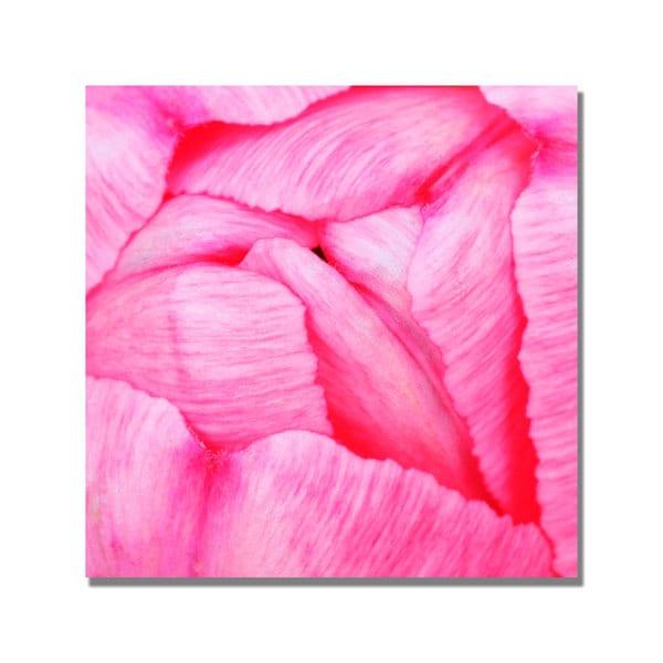 Kurt Shaffer 'Pink Tulip Abstract' Canvas Art