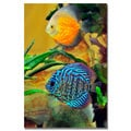 Kurt Shaffer 'Two Tropical Fish' Canvas Art