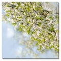 Delicate Spring Blossoms Oversized Gallery Wrapped Canvas