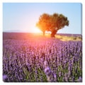 Fields of Lavender Oversized Gallery Wrapped Canvas