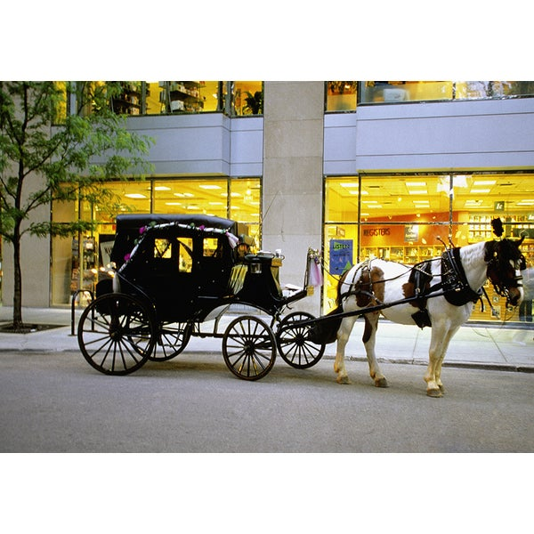 'Horse-Drawn Carriage Outside Store in Chicago, Illinois' Photography Canvas Print