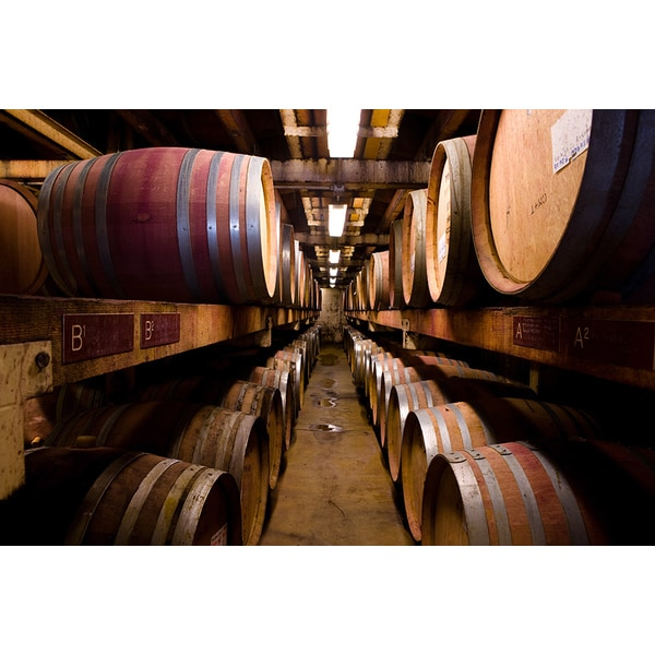 'Rows of Stacked Wine Barrels at Winery' Photography Canvas Print
