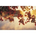 'Autumn Leaves, New England, USA' Photography Canvas Print