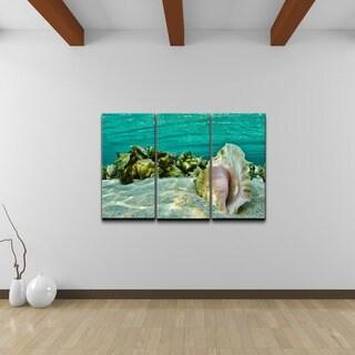 Chris Doherty 'Sandy Conch' 3-piece Canvas Wall Art Set