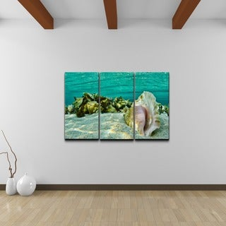 Chris Doherty 'Sandy Conch' 3-piece Canvas Wall Art Set