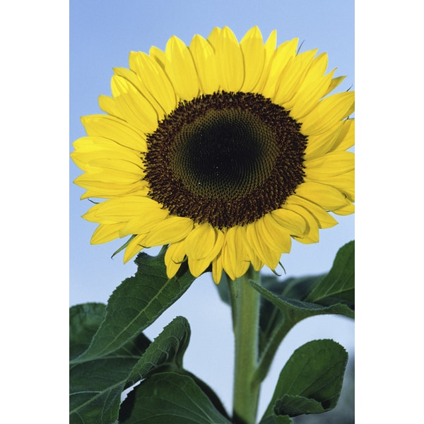 'Yellow Flower in Nature' Print Canvas Wall Art