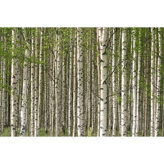 'Grove of Birch trees' Print Canvas Wall Art