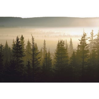 'Haze Over Lake in Forest at Dawn' Print Canvas Wall Art