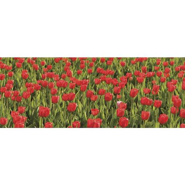 Ideal Decor 'Red Tulips' Wall Mural