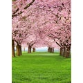 Ideal Decore 'Cherry Trees' Wall Mural