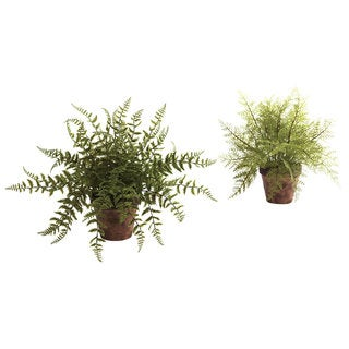 Decorative Fern Planters (Set of 2)