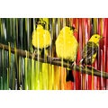 Maxwell Dickson 'Three Little Birds' Canvas Wall Art