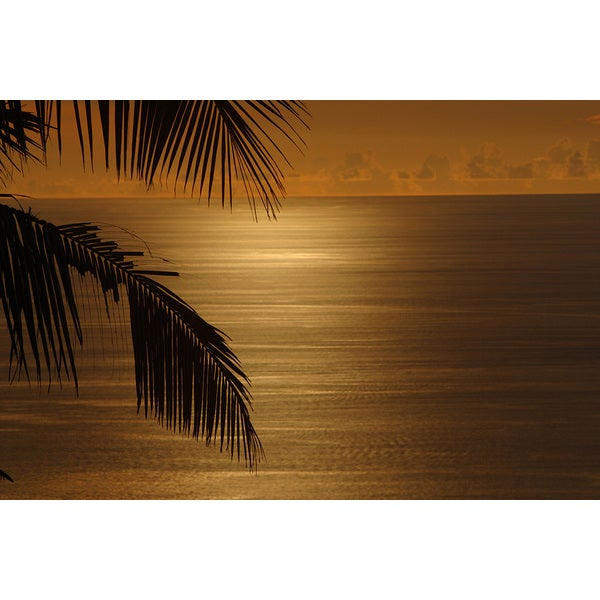 'Tropical Palm tree and ocean' Photography Print Canvas Wall Art