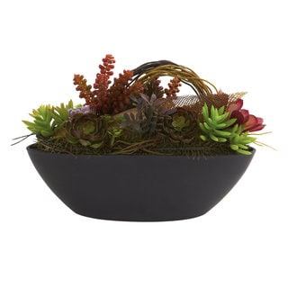 Mixed Succulent and Oval Black Container