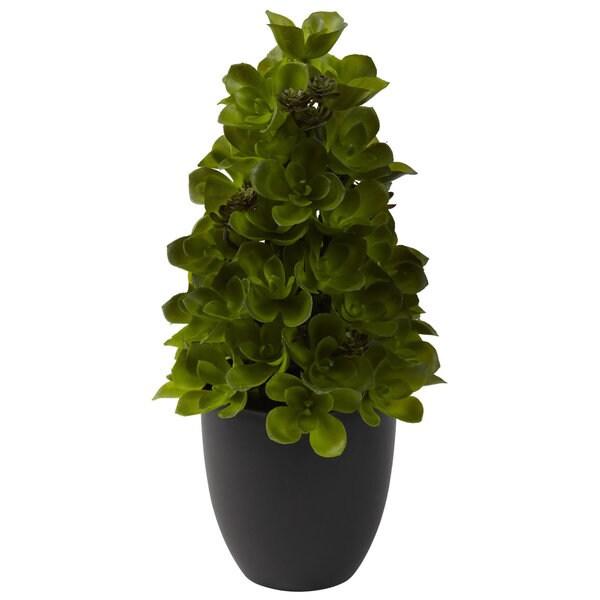 15-inch Echeveria Cone Topiary