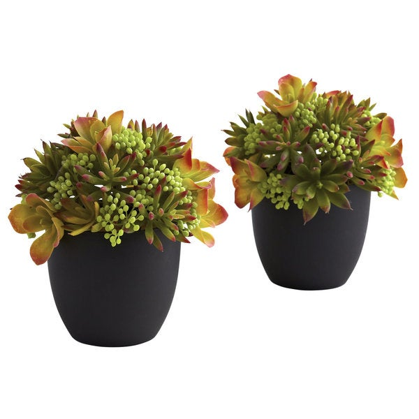 Mixed Succulent and Black Planter Set (Set of 2)