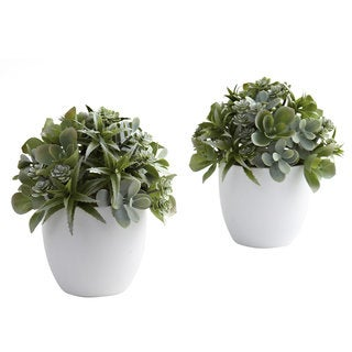 Mixed Succulent and White Planter Set (Set of 2)