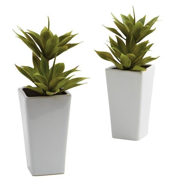 Double Mini Agave and Planter Decorative Plants (Set of 2)