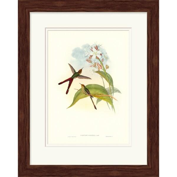 John Gould 'Hummingbird' Open Edition Giclee Print