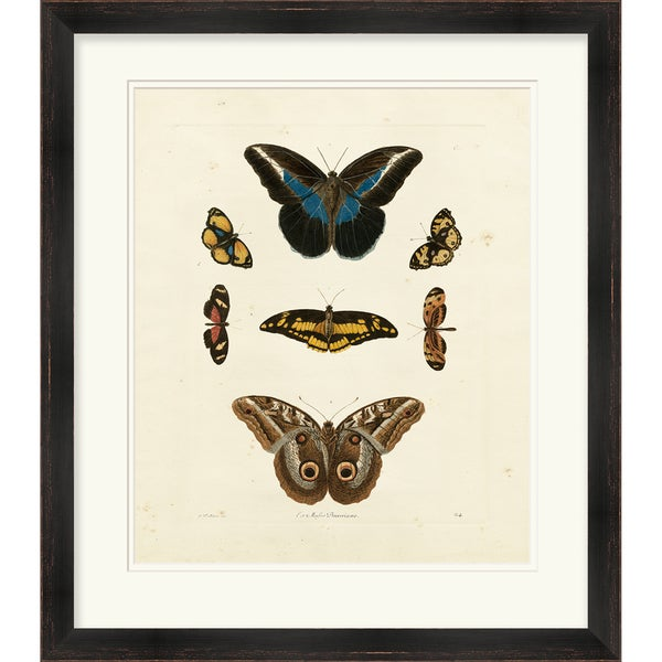 G. Wolfgang Knorr 'Butterflies' Open Edition Giclee Print
