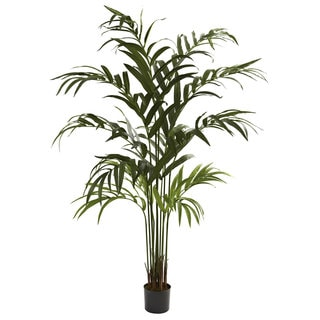 6-foot Kentia Palm Tree