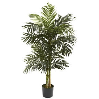 5-foot Golden Cane Palm Tree