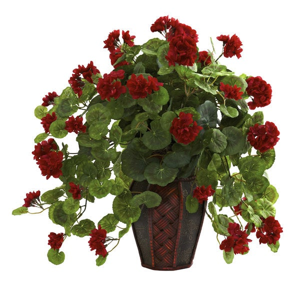 Geranium with Decorative Planter