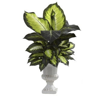 Dieffenbachia with White Ceramic Urn