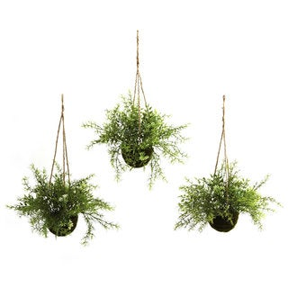 Ruscus and Sedum Hanging Basket (Set of 3)