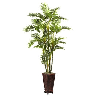 6.5-Foot Areca w/Decorative Planter