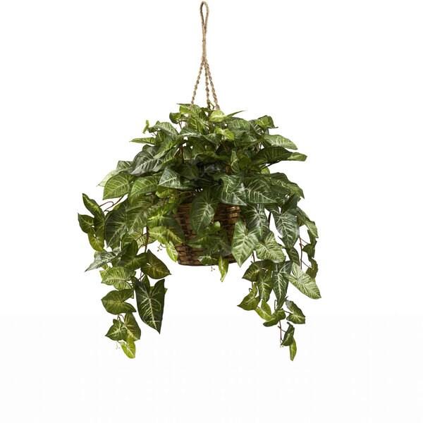 Nephthytis Hanging Basket