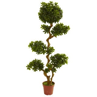 Pittispourm 5-foot UV Resistant Tree (Indoor/Outdoor)