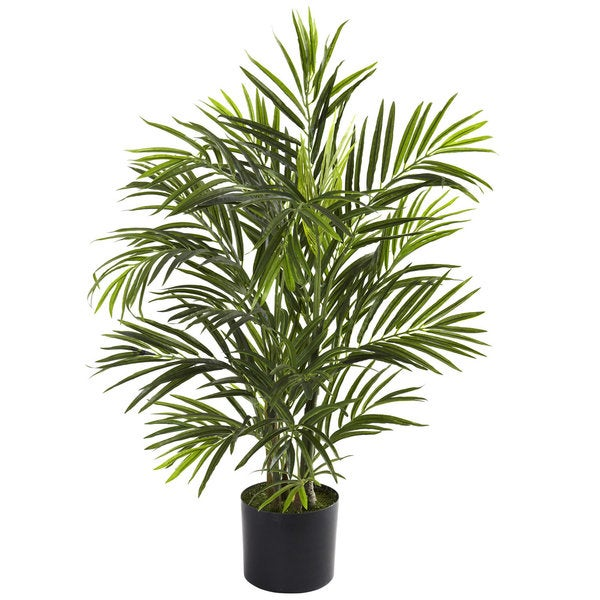 2.5-foot Areca Palm