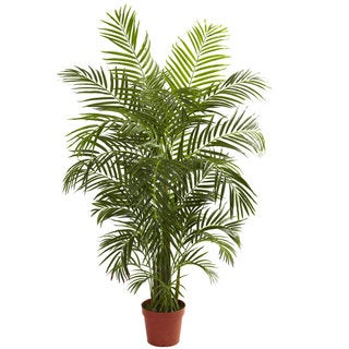 4.5-foot Areca Palm