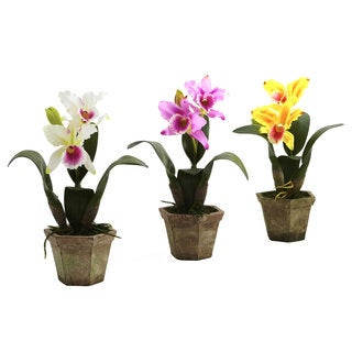 Cattelya 3-piece Orchid with Vase
