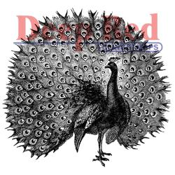 Deep Red Cling Stamp - Peacock