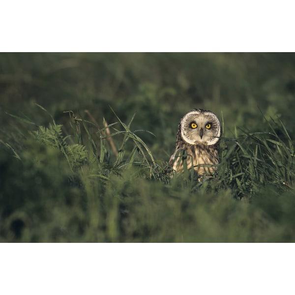 'Menacing Owl' Wildlife Photography Wall Art Canvas Print