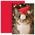 Festive Cat Boxed Holiday Cards