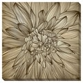 Dahlia II Gallery Wrapped Canvas