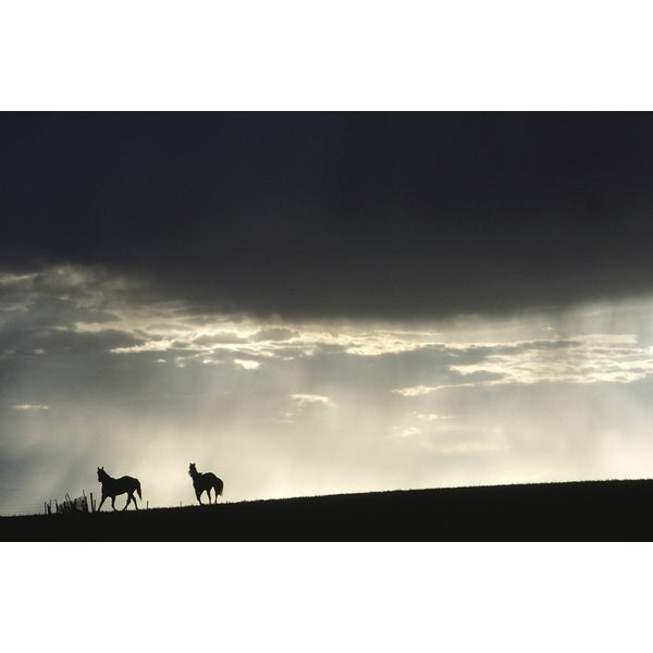 'Silhouettes of Two Horses at Dusk, Alberta, Canada' Wildlife Photography Wall Art Canvas Print