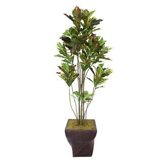 "Laura Ashley 82"" Tall Croton Tree with Multiple Trunks in 17"" Fiberstone Planter"