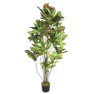 Laura Ashley 72-inch Croton Tree with Multiple Trunks
