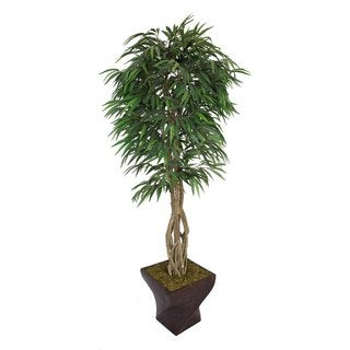 "Laura Ashley 88"" Tall Willow Ficus with Multiple Trunks in 17"" Fiberstone Planter"