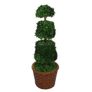 "Laura Ashley 49"" Tall Preserved Natural Spiral Boxwood Cone Topiary in 17"" Fiberstone Planter"