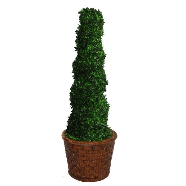 "Laura Ashley 55"" Tall Preserved Natural Spiral Boxwood Topiary in 17"" Fiberstone Planter"