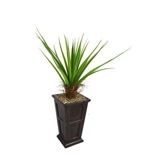"Laura Ashley 63"" Tall Agave Plant with Cocoa Skin in 16"" Fiberstone Planter"