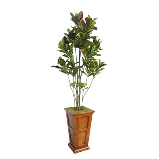 "Laura Ashley 91"" Tall Croton Tree with Multiple Trunks in 16"" Fiberstone Planter"